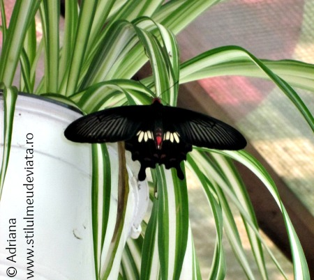 casa-fluturilor-praid9